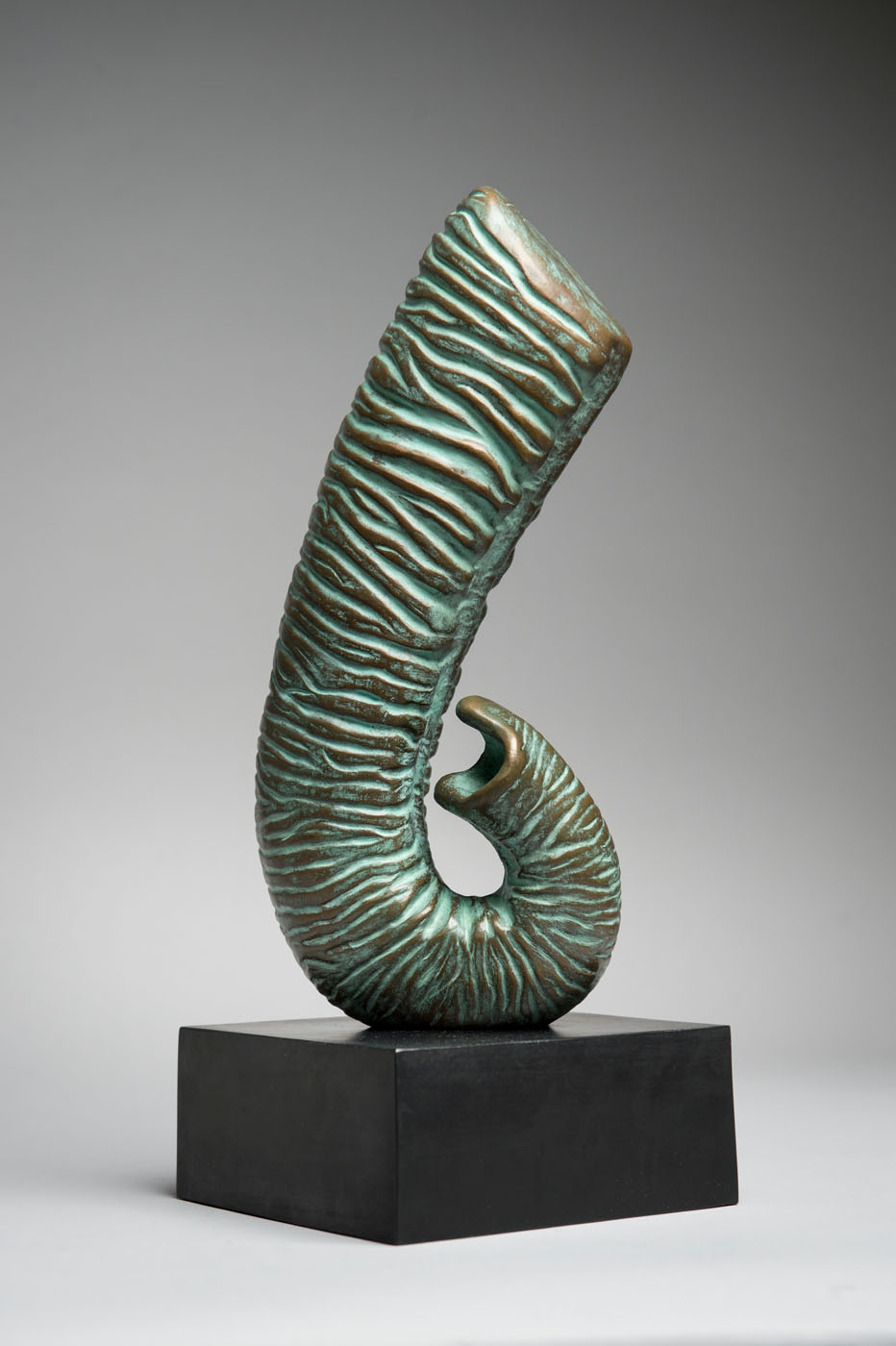 Bronze sculpture of an Elephant's Trunk by artist Anthony Smith