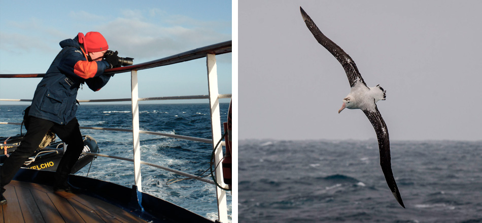 Anthony Smith photographing Wandering albatrosses in the South Atlantic